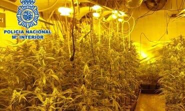 Cinco detenidos y 4.400 plantas de marihuana incautadas en dos chalés de Campo Real