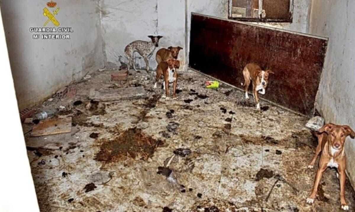 Hallan 22 perros en pésimas condiciones y cadáveres de otros siete en una finca de Ambite