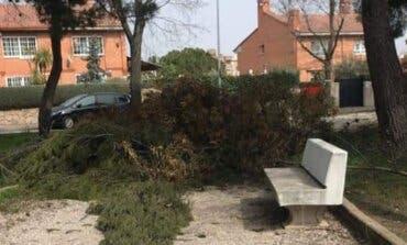 Denuncian que aún quedan restos del paso de Filomena en las calles de Coslada