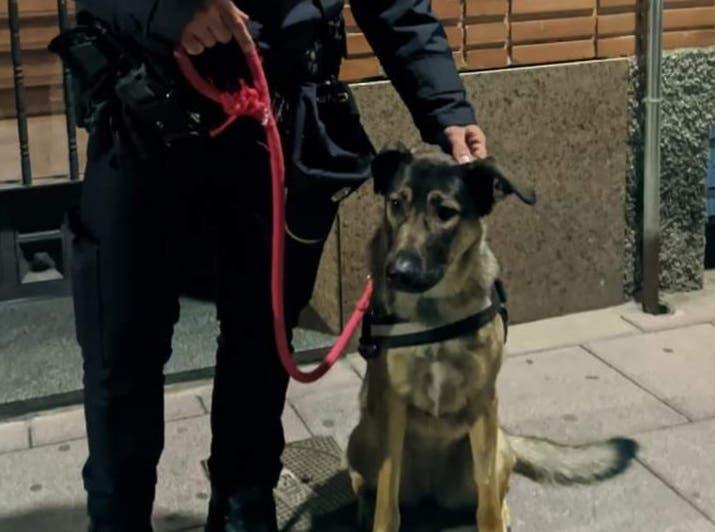 Detenido por dar puñetazos y patadas a su perra en Torrejón de Ardoz
