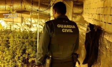Descubren una plantación de marihuana en Guadalajara con 785 plantas