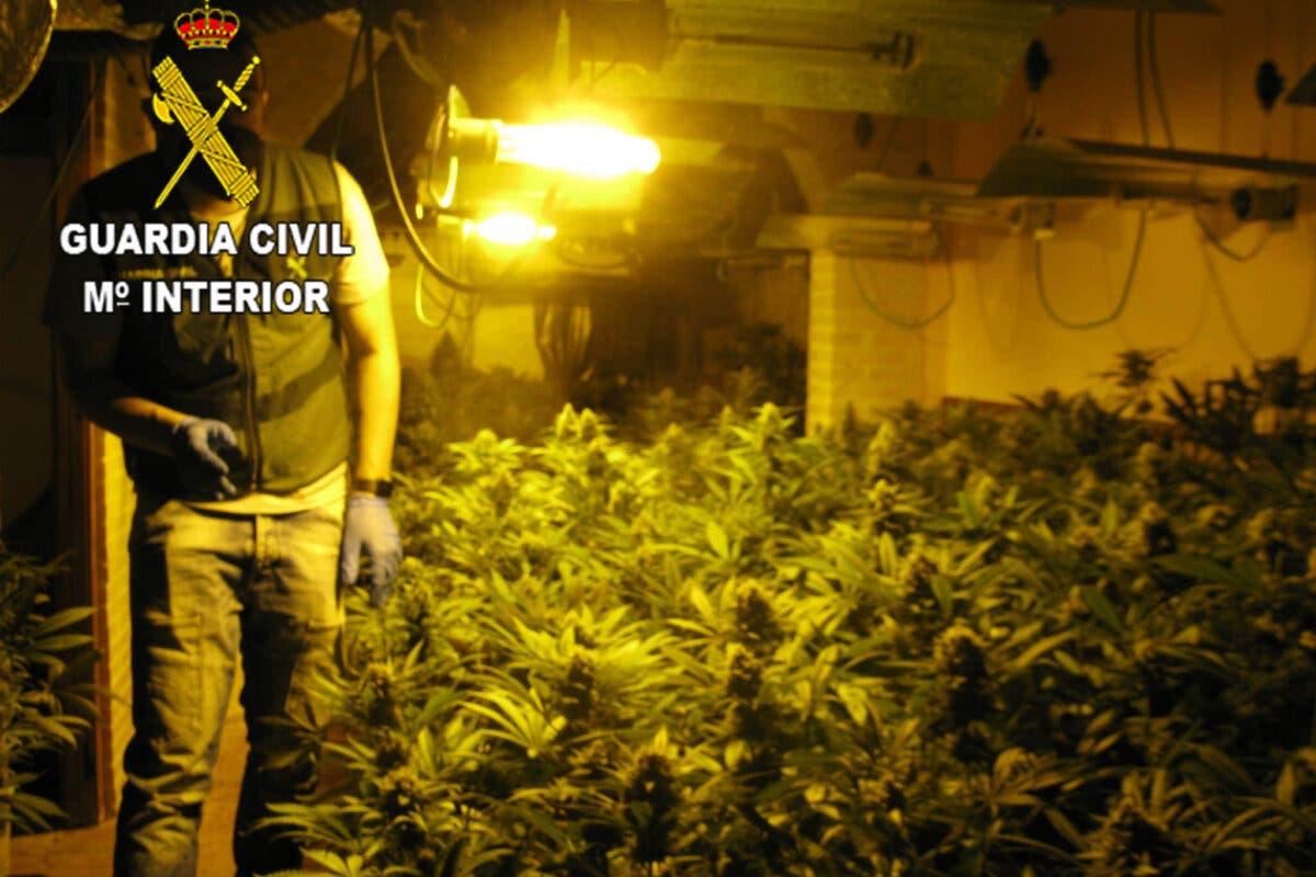 Cinco detenidos y3.022 plantas de marihuana incautadas en Torrejón del Rey