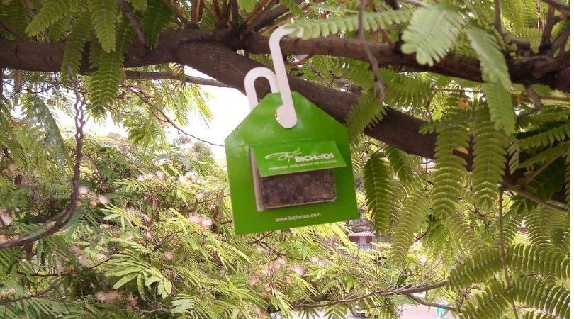 Velilla instala cajas con mariquitas y avispillas en los árboles para controlar las plagas de pulgón
