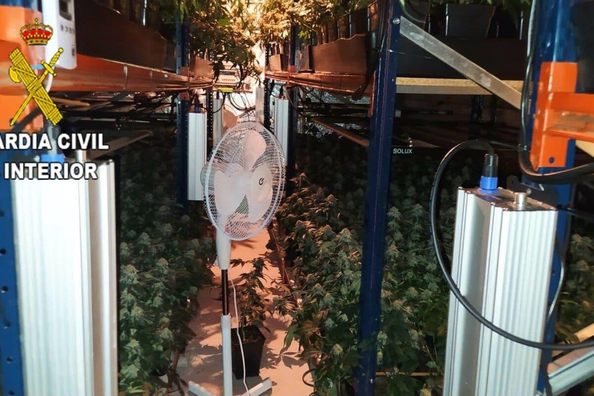 Detenida una mujer por cultivar 960 plantas de marihuana en una urbanización de Valdeaveruelo