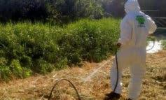 San Fernando de Henares inicia una campañacontra la proliferación de mosquitos y larvas