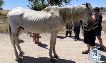 Rescatan a un caballo herido en la Cañada Real que llevaba días vagando solo