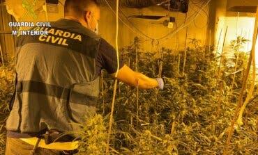 Desmantelan una plantación de marihuana con 1.590 plantas en un chalet de El Casar
