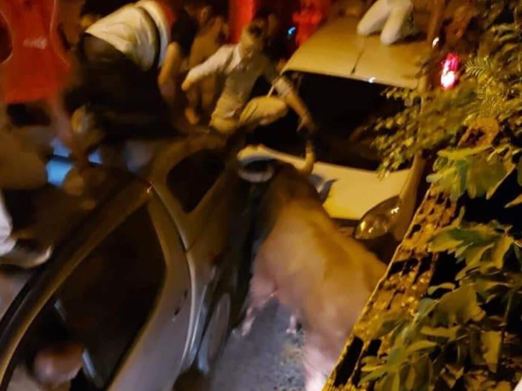 Dos heridos graves al escaparse un toro de la plaza de Brihuega, en Guadalajara