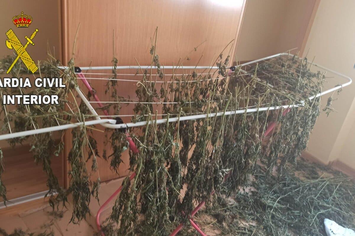 Desmanteladas dos plantaciones de marihuana en Chiloeches y Fuentenovilla