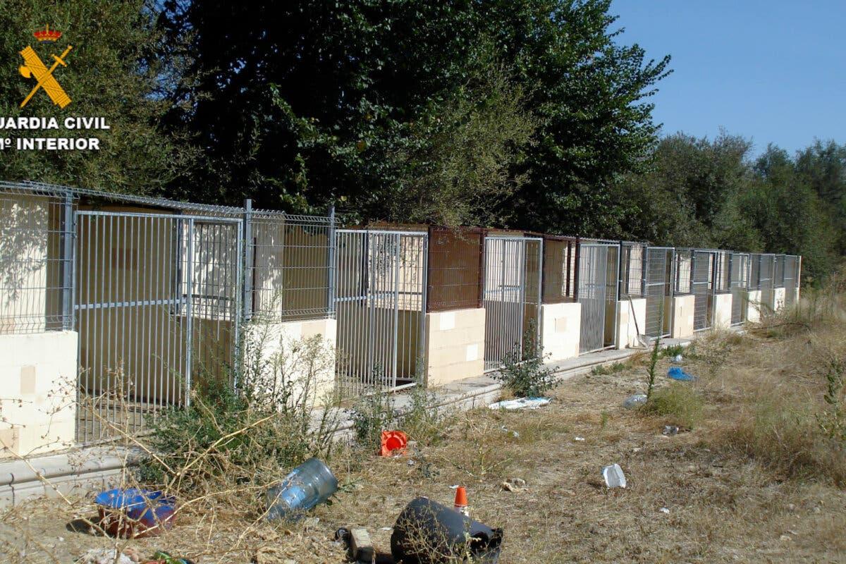 Detenidos por la muerte y maltrato de los perros de una residencia canina de Madrid