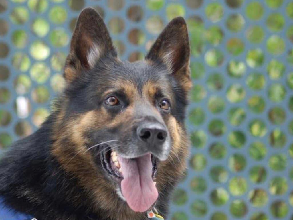 Muere Charly, el perro policía de Torres de la Alameda