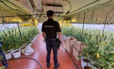 Desmantelan otra plantación de marihuana en Guadalajara, esta vez en Fontanar