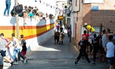 Campo Real recupera sus encierros taurinos tras levantarse las restricciones